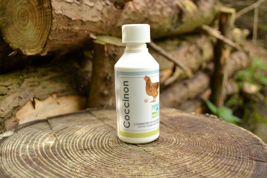 natural treatment for coccidiosis in poultry  chickens  hens