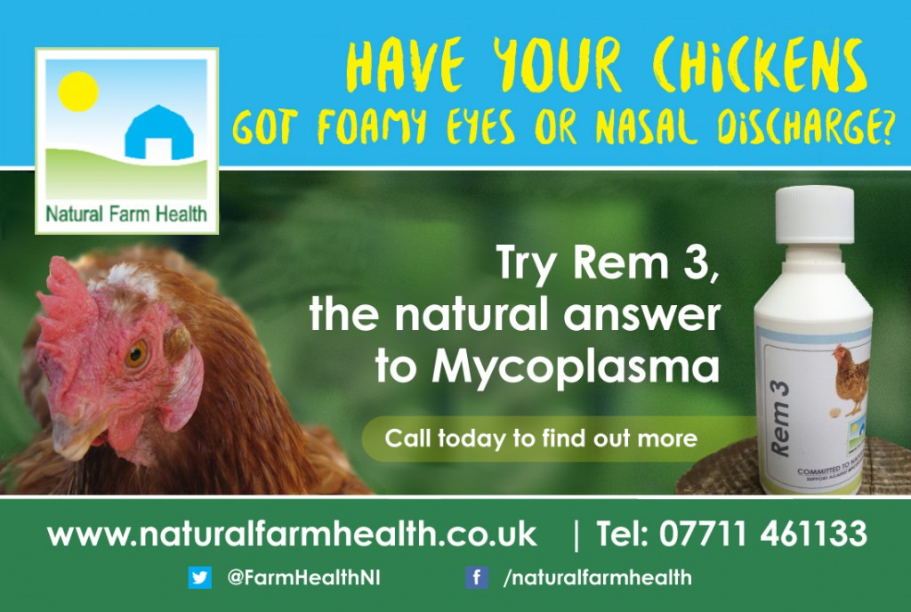 Mycoplasma in poultry