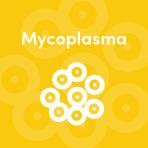 Improved pheasant health by treating mycoplasma