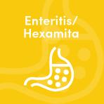 Hexamita pheasant health